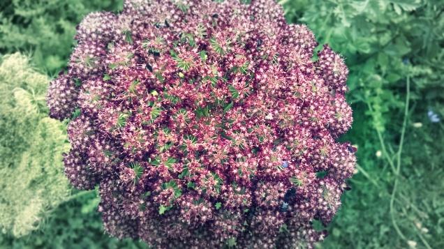 201607027 pink flower_F1