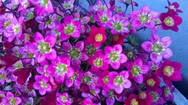 Zoomed picture of pink and purple flowers