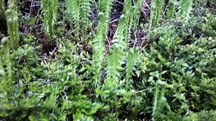 Zoomed picture of growing standing ferns
