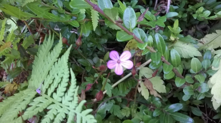 small tiny pink flower int he green of the forect