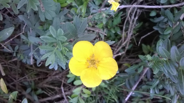 zoomed picture of yellow wild flower